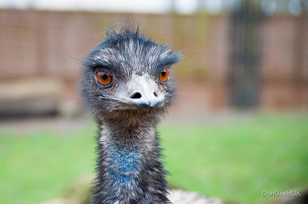 Hello Sexy Eyes:-) Emu by DonDavisUK