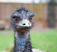 Hello Sexy Eyes:-) Emu by DonDavisUK