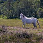 New Forest Pony by neverwinter