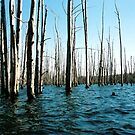 Flooded Forest by collin