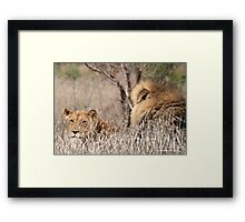 IN A DISTANCE, WELL CAMOUGFLAGED, THE LION AND LIONESS.. Framed Print