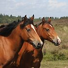 Pony herd, New Forest by neverwinter