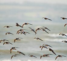 fly past at Duncannon Beach, County Wexford, Ireland by Andrew Jones