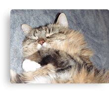 Cute when they sleeping  Canvas Print