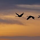 Cranes over Monte Vista by Gary Lengyel