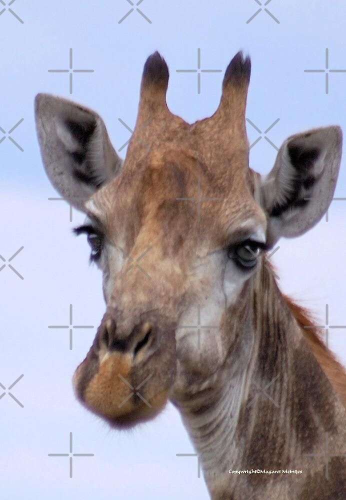 IN PORTRAIT - The Giraffe - giraffa camelopardis by Magriet Meintjes