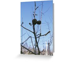 Old Fruit Greeting Card