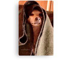 Master Obi-Wan Kenobi Chihuahua  Canvas Print