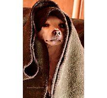 Master Obi-Wan Kenobi Chihuahua  Photographic Print