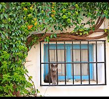 Curious cat on the window by Miro Slavin
