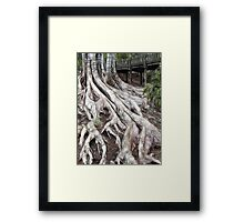 ROOTS 5 Framed Print