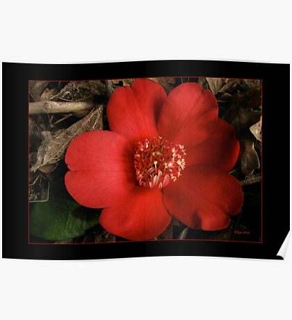 Portrait of a Red Camellia Poster