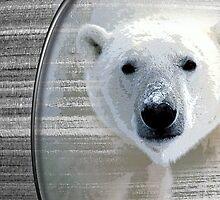 polar bear by arteology