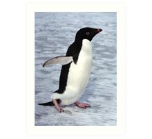 Adelie Penguin Walking on the Fast Ice Art Print