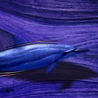 dolphin by arteology