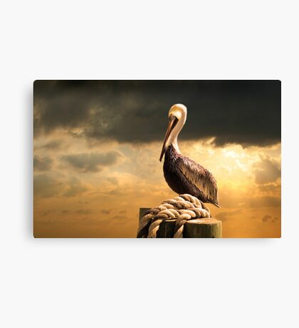 A Pelican after a Floridian Storm Canvas Print