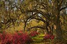 Live Oaks  by JHRphotoART