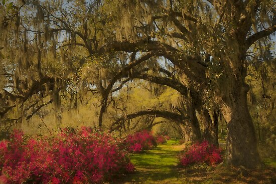Live Oaks  by JHRphotoART