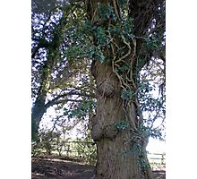 Tree in Upton Park, Easter Photographic Print