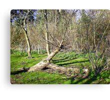 Tree Sculpture in Upton Park Canvas Print