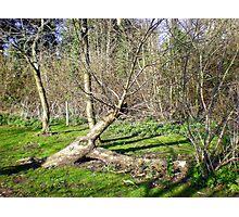Tree Sculpture in Upton Park Photographic Print