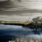 """""""Still Blue"""" by Barbara Simmons"""