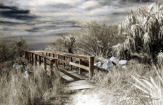 """StoneWalk"" by Barbara Simmons"