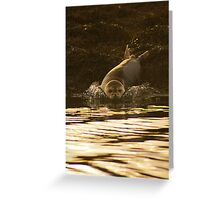 Right....Thats Enough Photographs,I'm Off! Greeting Card