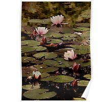 The lily pond. Poster