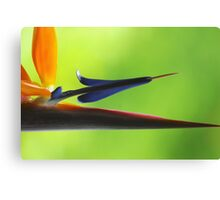 The Bird's Spear Canvas Print
