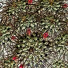 cactus abstract by elisabeth tainsh
