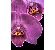 Moth Orchid Photographic Print