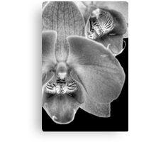 Moth OrchidBW Canvas Print