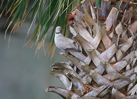 My Own Palm Tree by Deborah  Benoit