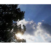 Through the tree Photographic Print