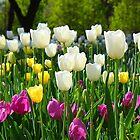 Spring by Kaushik Rabha