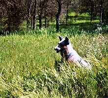 The Watcher in the Woods Dog keeping watch in a field in Three Rivers California by Rick Short