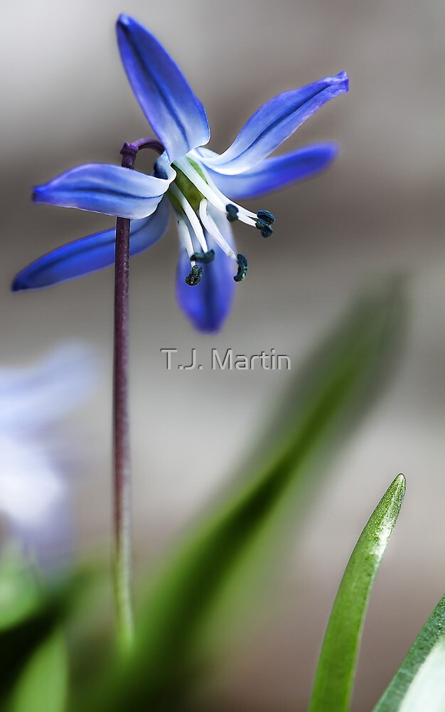 Early Spring Beauty - by T.J. Martin