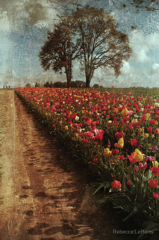 Tulip Fields by Rebecca Lefferts