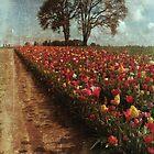 Tulip Fields by Rebecca Lefferts