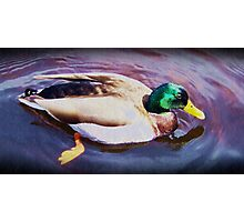 Ducks are out too! Photographic Print