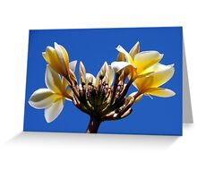 Welcome Flowers Greeting Card