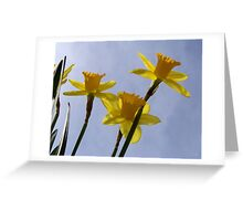 Daffodil from a bug's point of view. Greeting Card