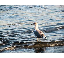 bird  enjoying the water Photographic Print
