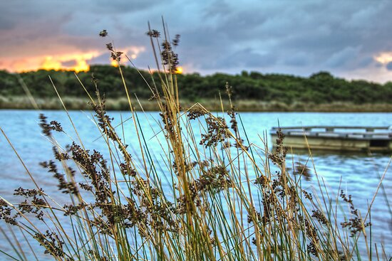 Anglesea, Victoria by Lawrie McConnell