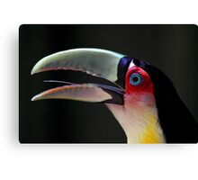 Red Breasted Toucan Portrait at Iguassu, Brazil Canvas Print