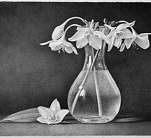 White flowers by Dietrich Moravec