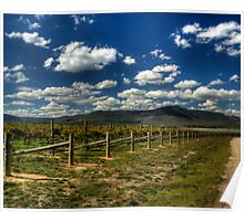 Vineyard and the mountains Poster