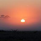 First misty sunrise of autumn by Julie Sleeman