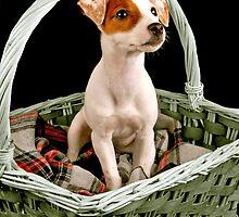 Basketcase by claraneva